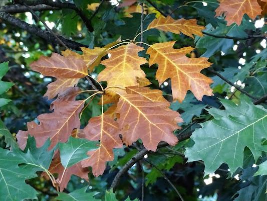 L'autunno sta arrivando di dan