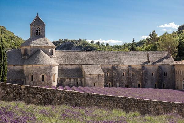 Viola provenzale di Welj