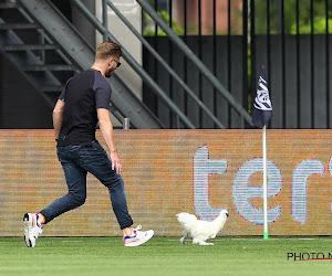 🎥 Des oeufs lancés et un poulet sur la pelouse en guise de protestation, lors d'Heracles - Heerenveen