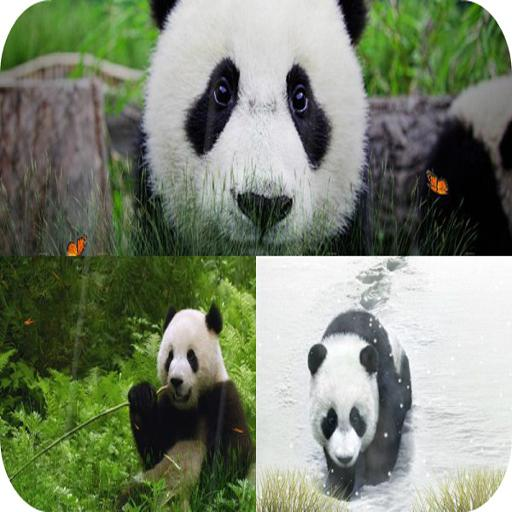 cute panda live wallpaper for android