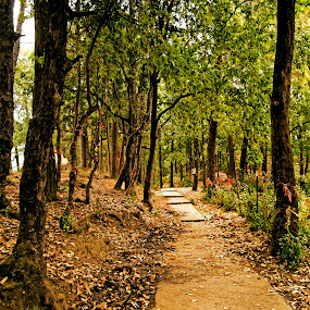The Lonely Road by Debopam Banerjee - Landscapes Travel ( walking, holly, wood, sadness, bright, road, landscape, alley, lane, life, tree, nature, cold, autumn, lifestyle, trail, weather, dirt, lonely, isolated, park, loneliness, green, track, forest, leisure, steps, depression, outdoors, silence, branch, walk )