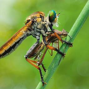 breakfast by Vandie Ndie - Animals Insects & Spiders