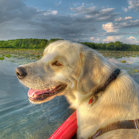 Izzy by James Rudick - Animals - Dogs Portraits ( dogs, hdr, kayak, portrait,  )