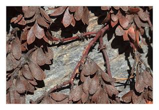 Photo: Eastern Sierras-20120716-473