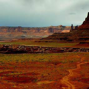 White Rim Driving by David Hughes - Landscapes Deserts ( mountains, canyonlands, white rim, scenic drives, deserts )