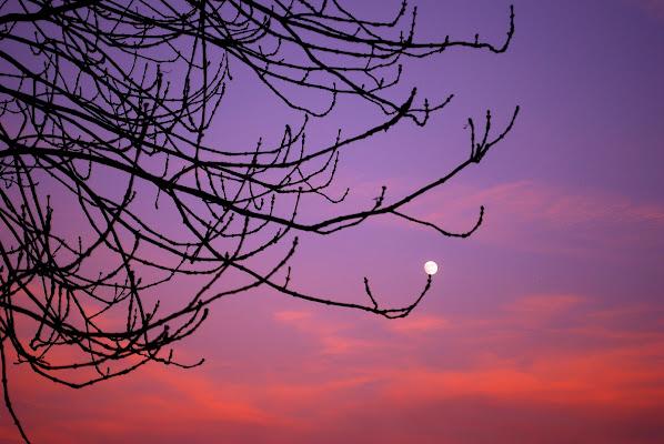Germoglio di luna di Daimon