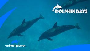Dolphin Days thumbnail