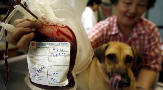 """""""Cada vez hay más pruebas"""" de la transmisión de humanos a felinos y perros"""