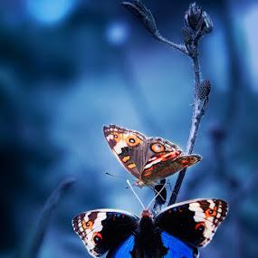 Talk by Setiady Wijaya - Animals Insects & Spiders
