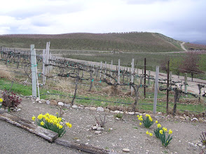 Photo: Fruit trees are also grown the area, apricot, cherry and apple mostly.