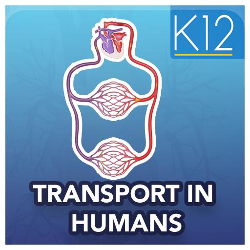 Transport in Humans Biology (app)