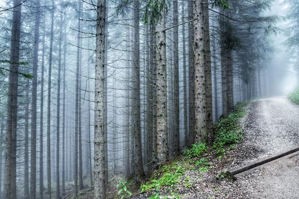 In mezzo al bosco di selena_corsellini