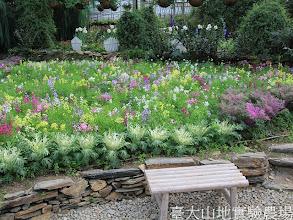 Photo: 拍攝地點: 梅峰-溫帶花卉區  拍攝植物: 葉牡丹(前)和柳穿魚(後) 拍攝日期:2012_03_02_FY