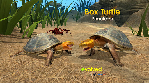 Box Turtle Simulator