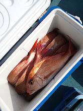 Photo: これもタムラさん。 真鯛12匹でした!