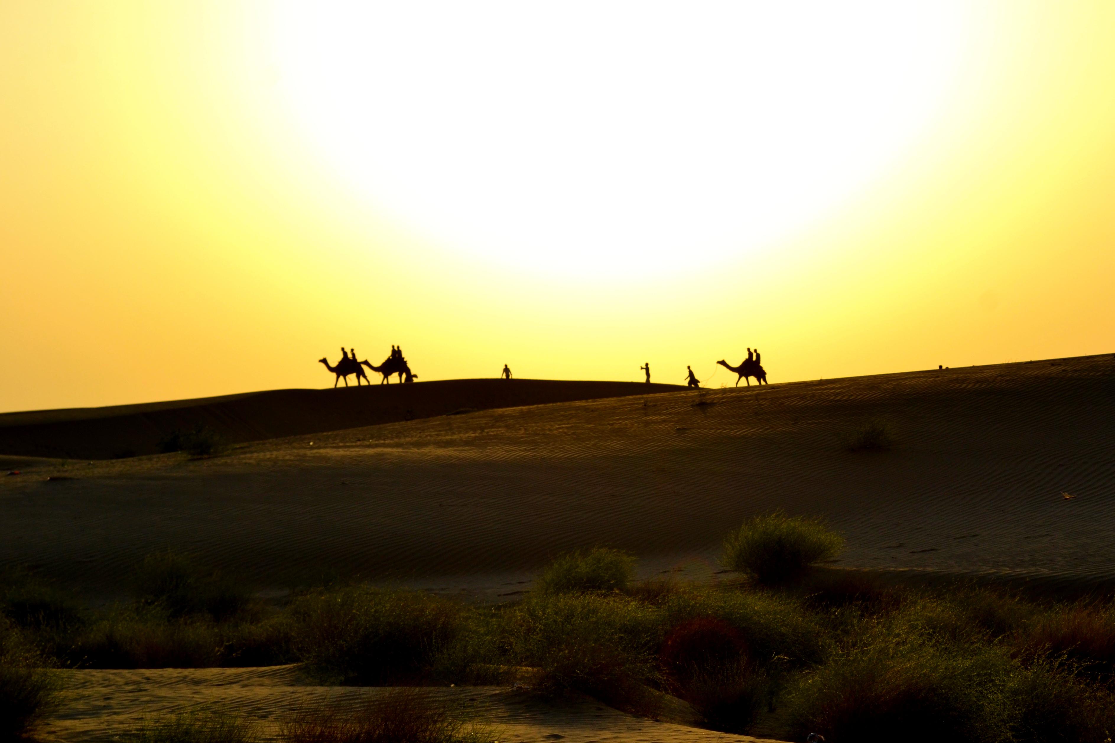 Indian desert