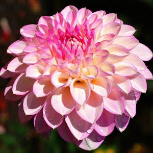 Flowers avonside 6th march 14 110.JPG