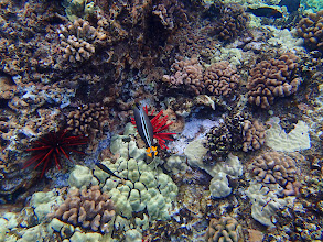 Photo: Amazing sea-life.