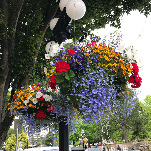 Hanging flowers line the streets along the waterway in Victoria, British Columbia.