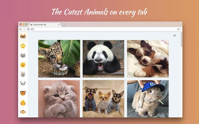 Cute Animal Tab - New Tab Theme