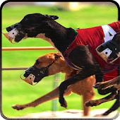 Greyhound Dog Racing 3D