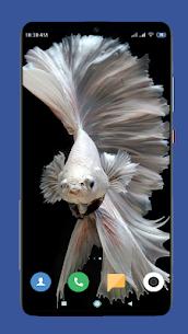Betta Fish Wallpaper HD 2
