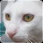 Download Cat Sounds apk