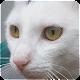 Cat Sounds (app)