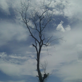 Sky@tree by Md Zakir Hossain - Nature Up Close Other Natural Objects ( sky@tree )