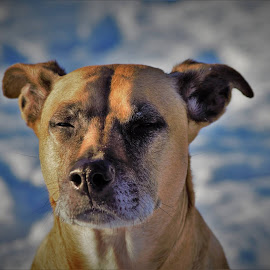 by Donna Schmidt - Animals - Dogs Portraits