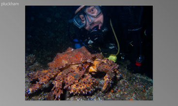 Photo: Lakan with Puget sound king crab