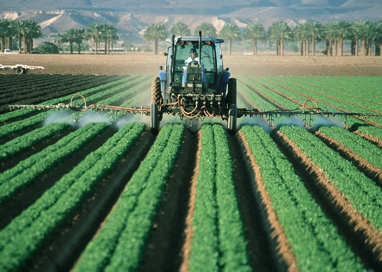 Industrial agriculture, the nemesis of Companion Planting