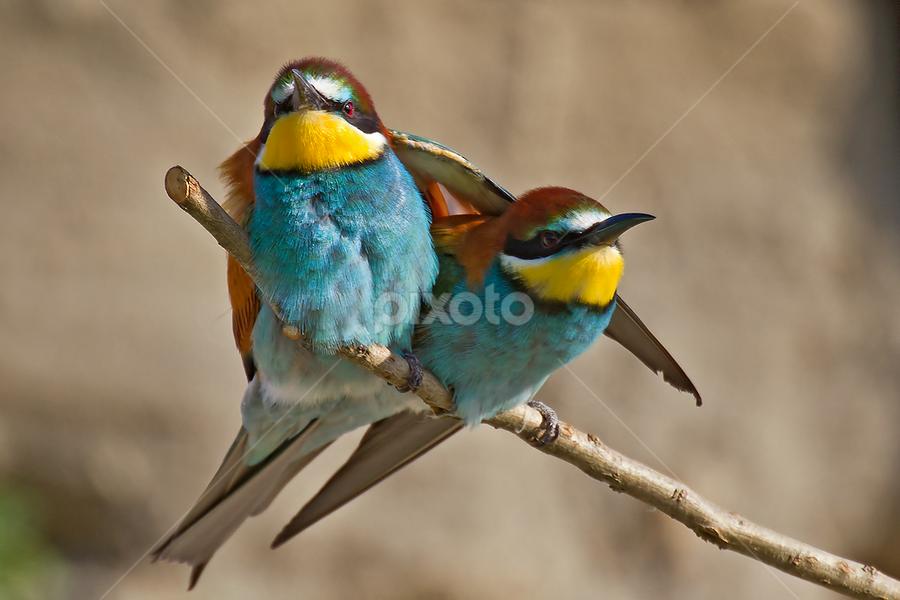 The friendship by Alberto Carati - Animals Birds