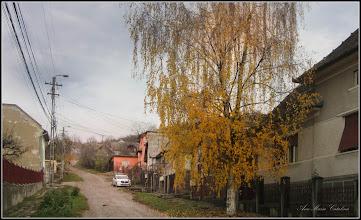 Photo: Str. Dorobantilor, mesteacan - 2017.11.13