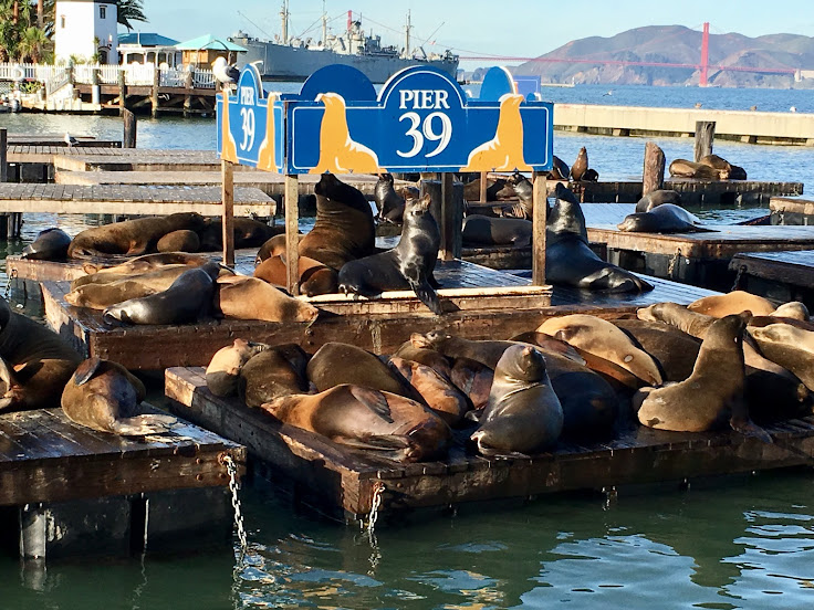 Sea lions sun themselves near Pier 39.