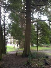 Photo: Malia in Lafayette Park in San Francisco, CA