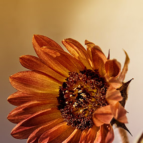 Hello world by Delia Galhotra - Nature Up Close Other plants ( plant, digiphotography, nature, petals, summer, sunflower, brown, garden )