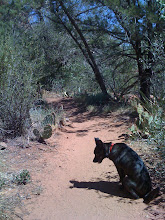 Photo: Malia in Sedona, near Slide Rock State Park