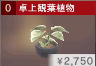 卓上観葉植物