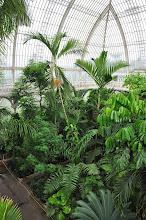 Photo: Aanzicht in Palmhouse van op de bovenverdieping Kew - Royal Botanical Gardens