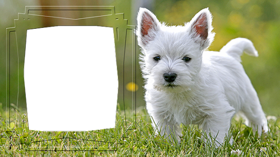 Dogs Photo Frames - Apps on Google Play