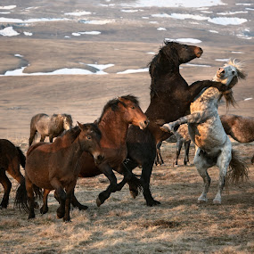 The abandoned horses by Andrija Vrcan - Animals Horses ( horses,  )