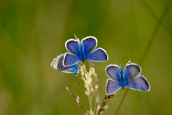 Blu Butterflies di giuseppedangelo
