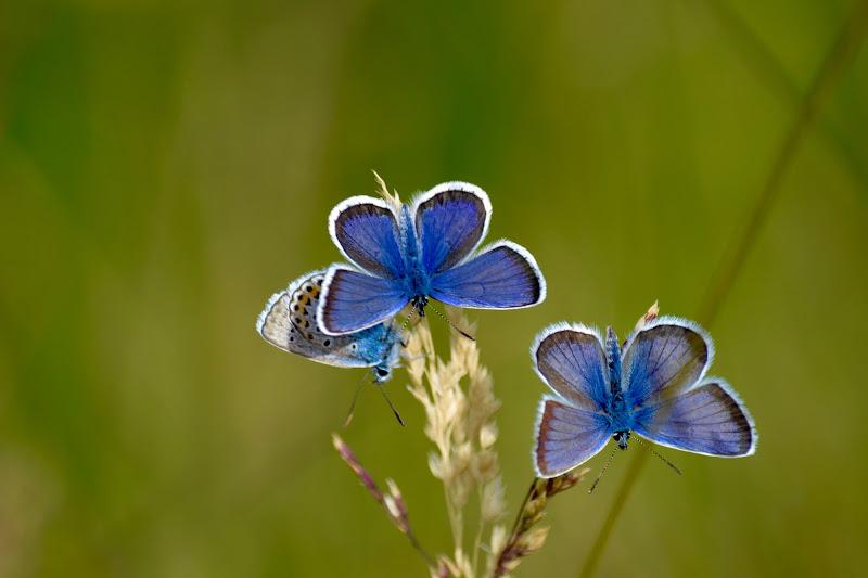 Blu Butterflies di joepixel