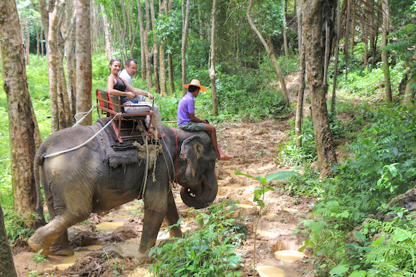 Elephant ride through the lush green jungle of Krabi