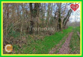terrain à Selles-sur-Cher (41)