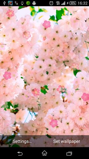 Beautiful Sakura LWP