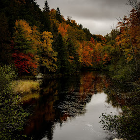 Fall color stream by Michael Haagen - Landscapes Forests ( wisconsin, fall colors, fall, stream, waterscape,  )