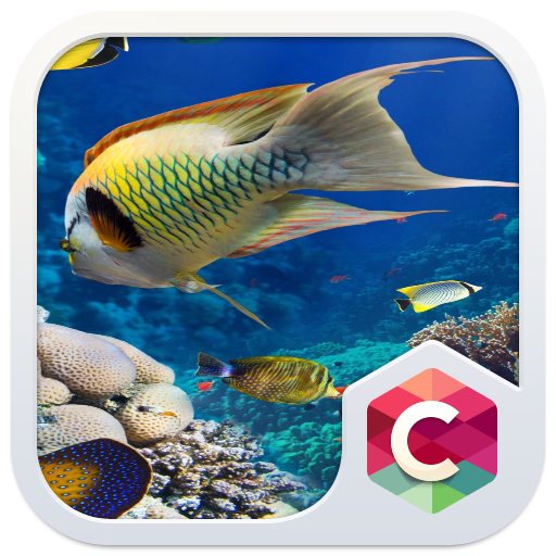 Aquarium Launcher Theme: Real Sea World Wallpaper