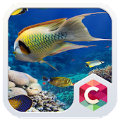 Aquarium Launcher Theme: Real Sea World Wallpaper